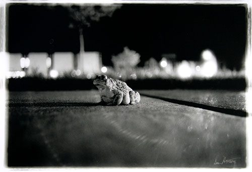 Apathetic Toad photo